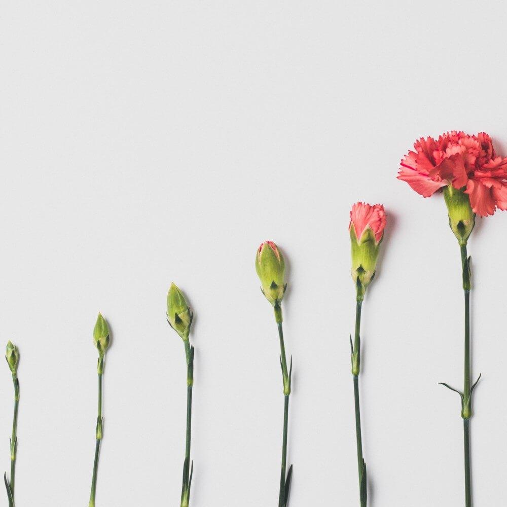 Wachstum anhand von Blumen erklärt