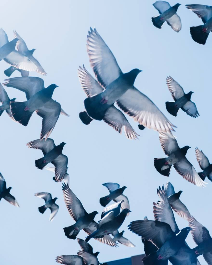 Taube, die sich in die Luft erheben