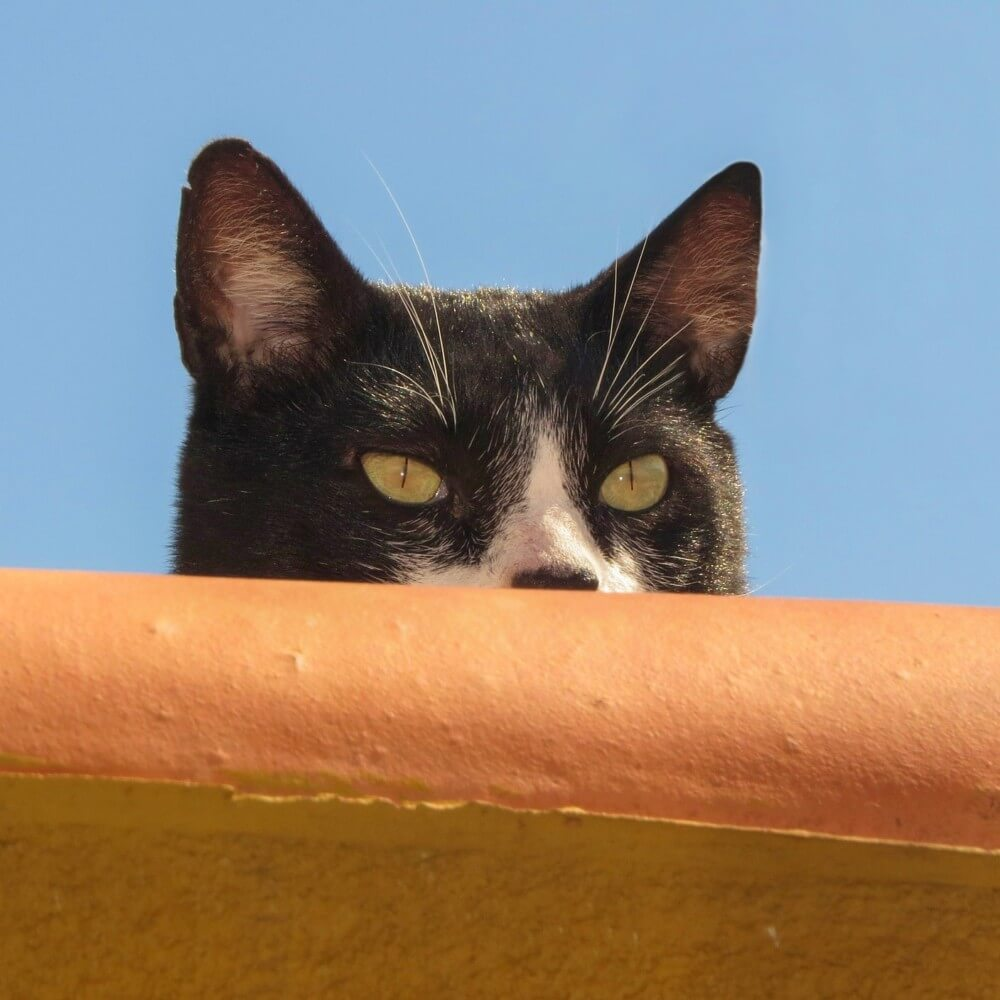 Katze die ihr Ziel im Auge behält